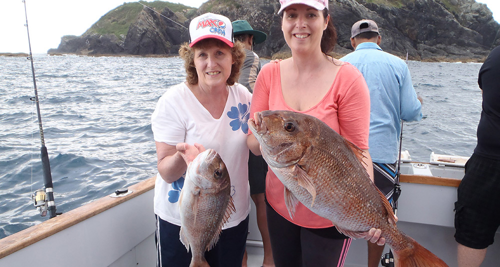 Line fishing bream bay charters for Half day fishing trips
